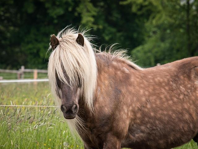 Animal Farm Wallpaper Horse Stallion Mane 183 Free Photo On Pixabay