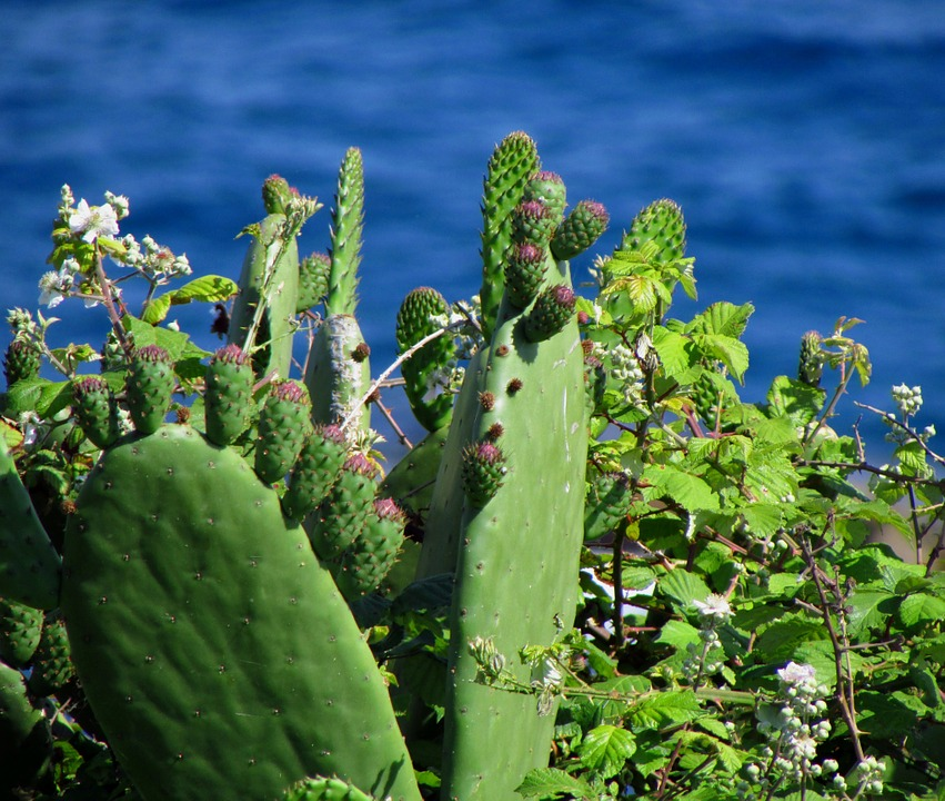 Rose Flower Wallpaper Hd Free Download Free Photo Plant Sea Cactus Green Flower Free Image