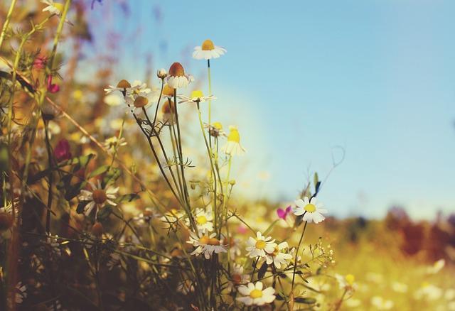 Free Fall Flowers Desktop Wallpaper Meadow Wallpaper Summer 183 Free Photo On Pixabay