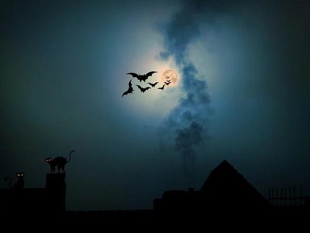 Black Rose Wallpaper 3d Free Illustration Night Moonlight Moon Full Moon