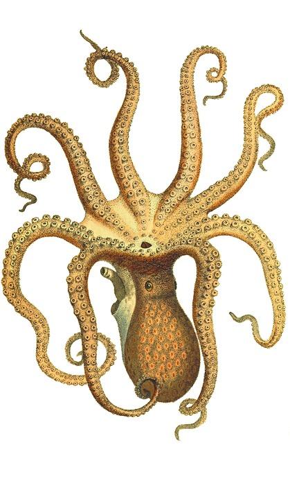 Antique Car Wallpaper Hd Octopus Vintage Squid 183 Free Image On Pixabay