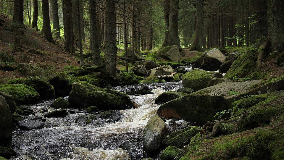 Gloomy Fall Wallpaper Forest Stream Umava The 183 Free Photo On Pixabay