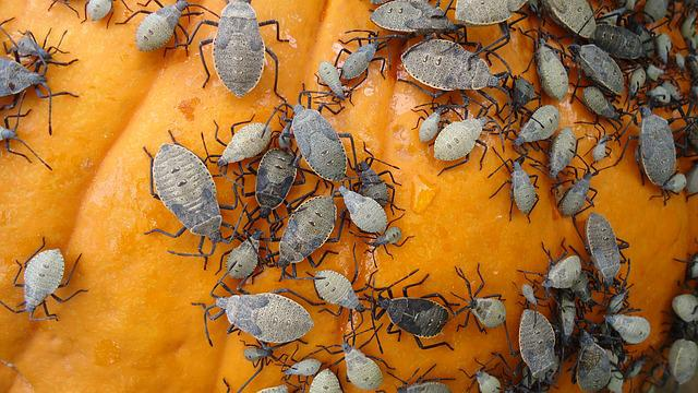 Fall Season Wallpaper Free Pumpkin Beetle Bug 183 Free Photo On Pixabay
