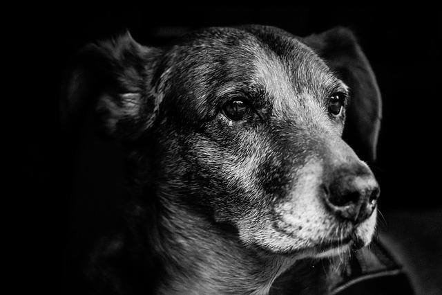 Cute Small Sad Girl Wallpaper Dog Portrait Snout 183 Free Photo On Pixabay
