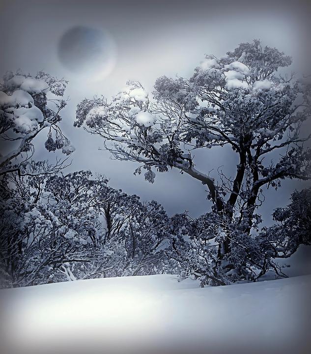 Forest In 3d Landscape Wallpaper 겨울 화이트 블루 183 Pixabay의 무료 사진