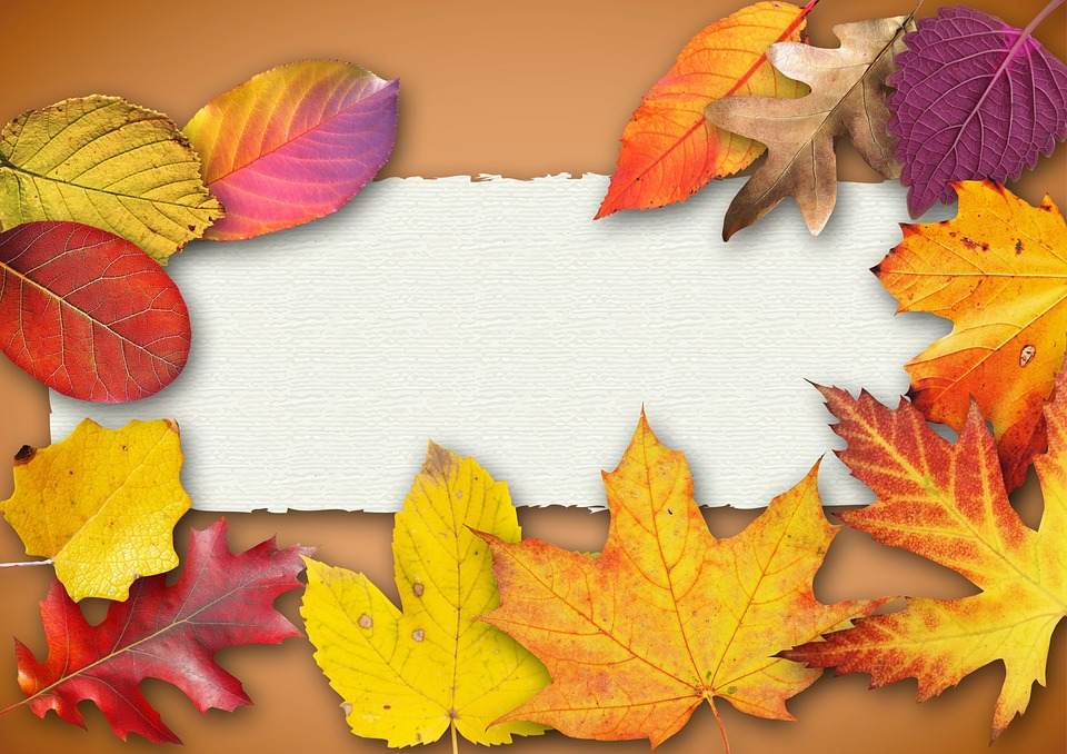 Falling Leaves Animated Wallpaper Free Photo Autumn Banner Poster Text Box Free Image
