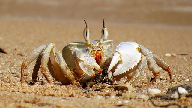 Cute Ghost Wallpaper Crabs Crab Sea 183 Free Photo On Pixabay