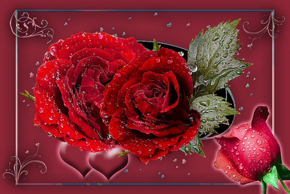 Rosas Rojas Capullo De Rosa · Imagen gratis en Pixabay - rosas y corazones