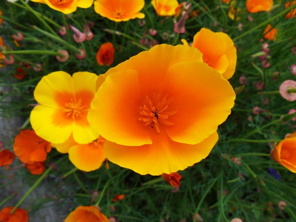 Wallpaper Images Hd Flowers Photo Gratuite Fleurs Sauvages Orange Jaune Image