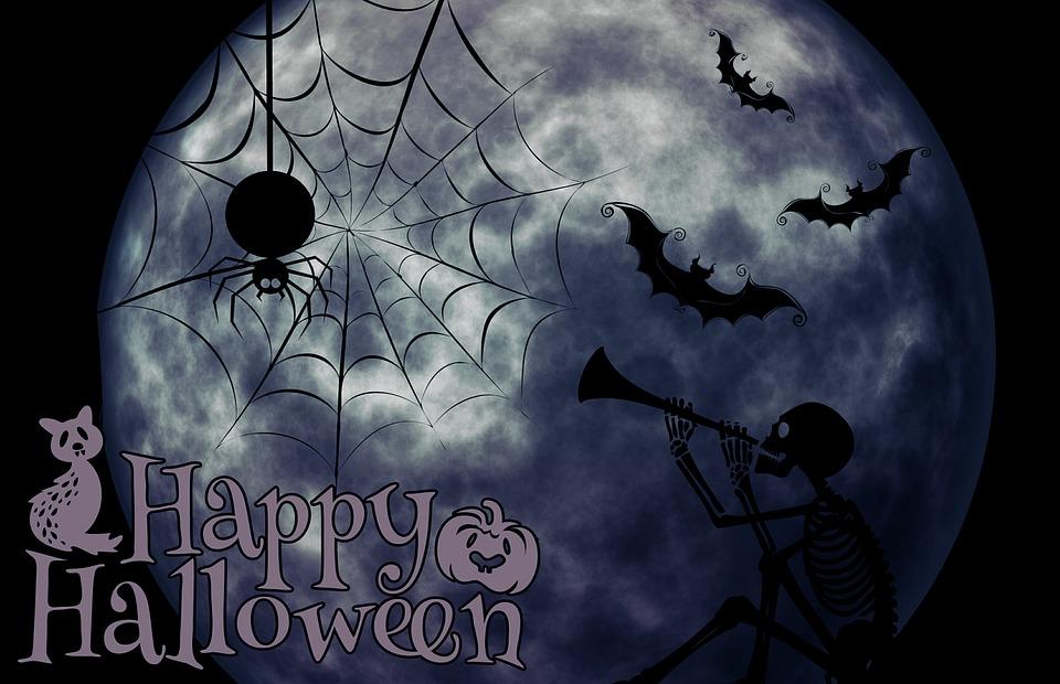 Cute Halloween Cat Wallpaper Halloween Skeleton Cat 183 Free Image On Pixabay