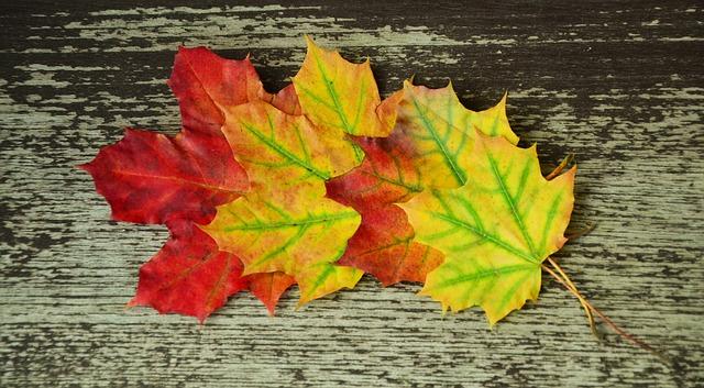 Fall Foliage Computer Wallpaper Free Photo Fall Foliage Maple Leaves Autumn Free
