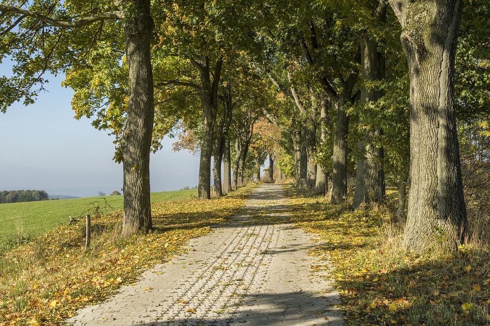 Girl In Woods Wallpaper Ore Mountains Autumn Scheibenberg 183 Free Photo On Pixabay