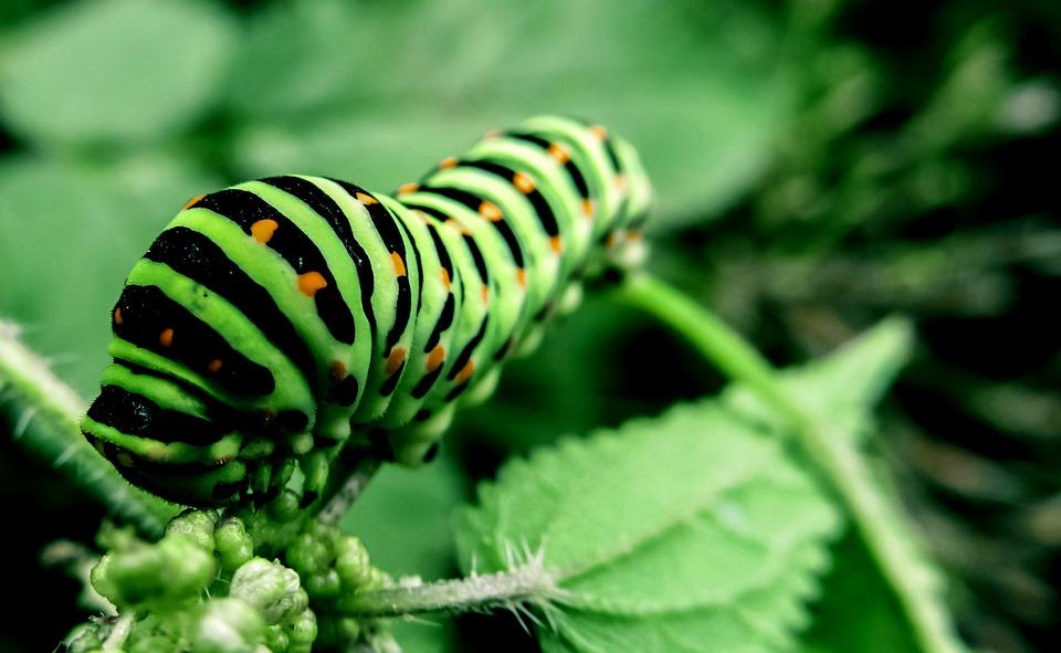 Nature Animal Wallpaper Hd Chenille Scarab 233 E Insecte 183 Photo Gratuite Sur Pixabay