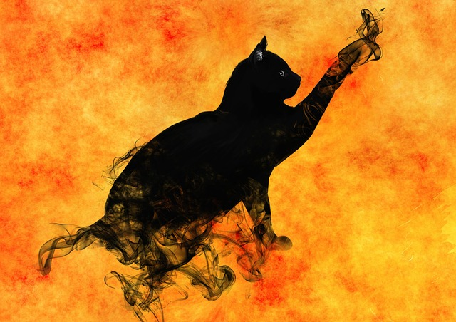 Beauty Full Girl Wallpaper Cat Surreal Silhouette 183 Free Image On Pixabay