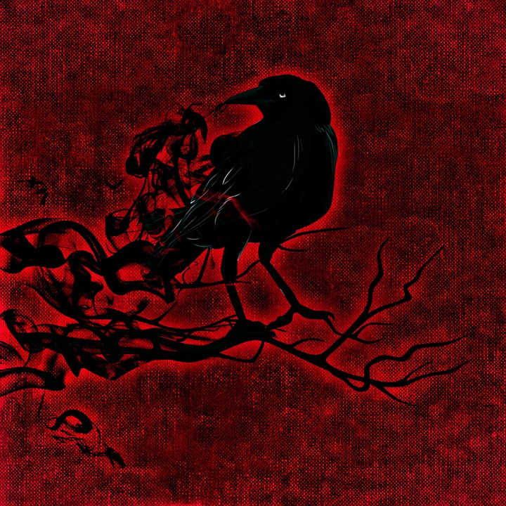 Black Rose Wallpaper Free Illustration Raven Crow Night Creepy Free Image