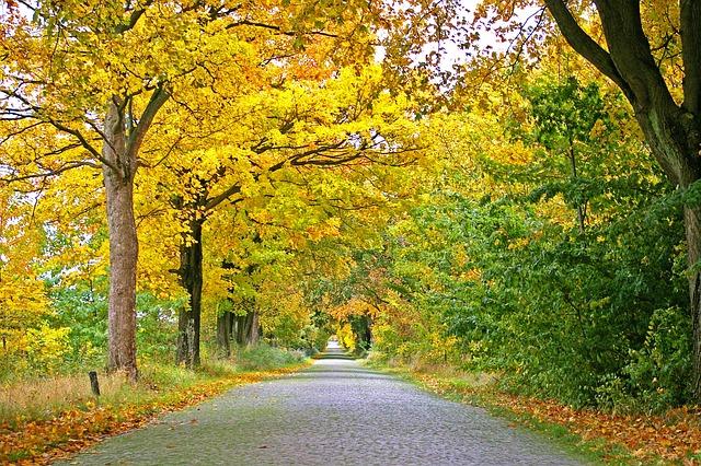 Vermont Fall Foliage Wallpaper L Automne Avenue Arbres 183 Photo Gratuite Sur Pixabay
