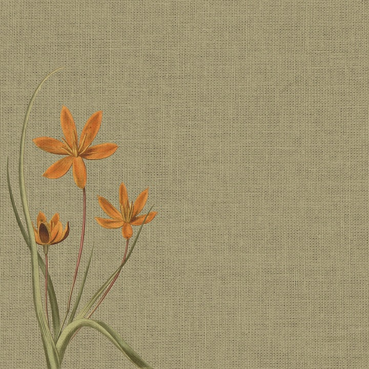 Black Vintage Wallpaper Free Illustration Background Burlap Orange Flower