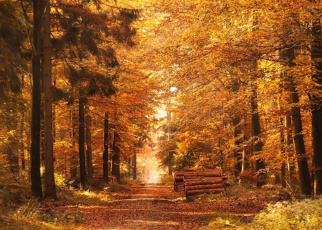 Fall Foliage Deskt Op Wallpaper Kostenloses Foto Waldweg Herbst Herbstbl 228 Tter