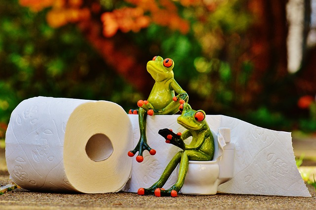 Frog Poop Free Photo: Frog, Toilet, Loo, Session, Funny - Free Image