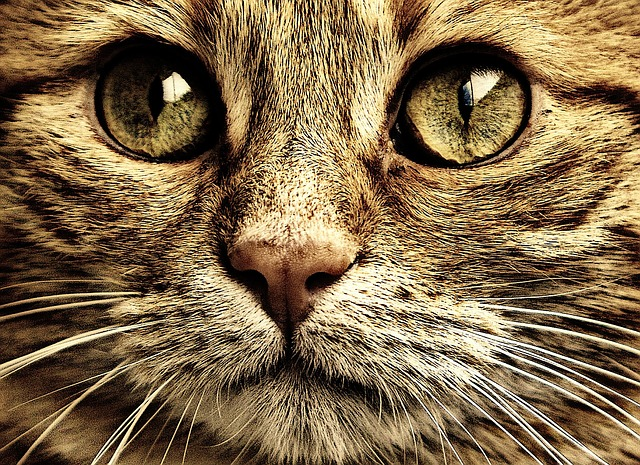Download Wallpaper Cute Cat Cat Sepia Cute 183 Free Photo On Pixabay