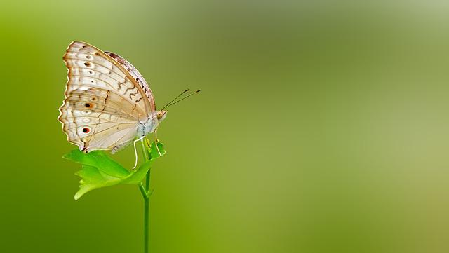 Fall Of The Leafe Wallpaper Free Photo Butterfly Matting Macro Free Image On