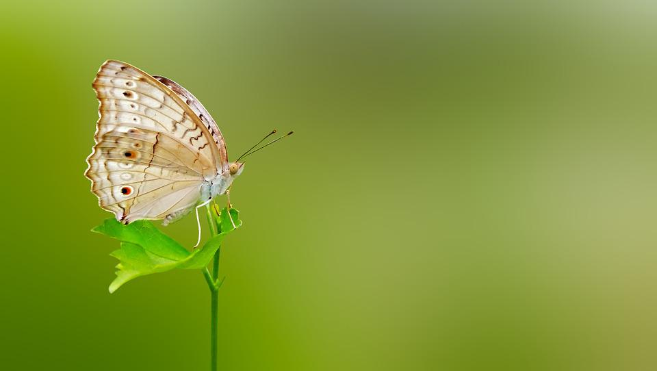Butterfly Wallpaper For Desktop With Animation Free Photo Butterfly Matting Macro Free Image On