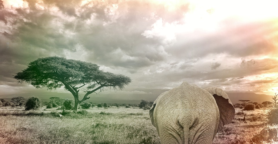 Free Landscape Wallpaper Hd Free Photo Elephant Savanna Africa Animal Free Image