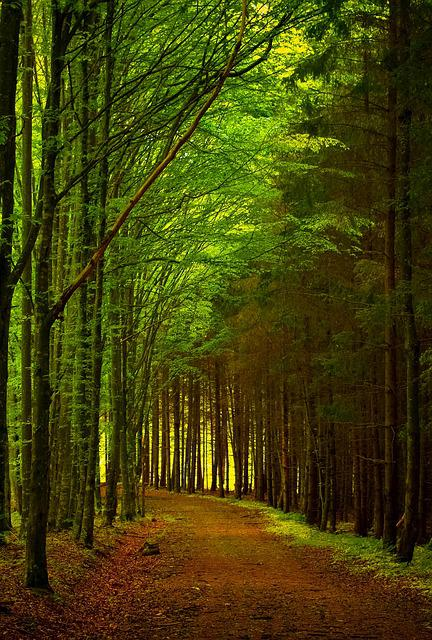 Fall Flower Computer Wallpaper Free Photo Green Forest Path Road Nature Free Image