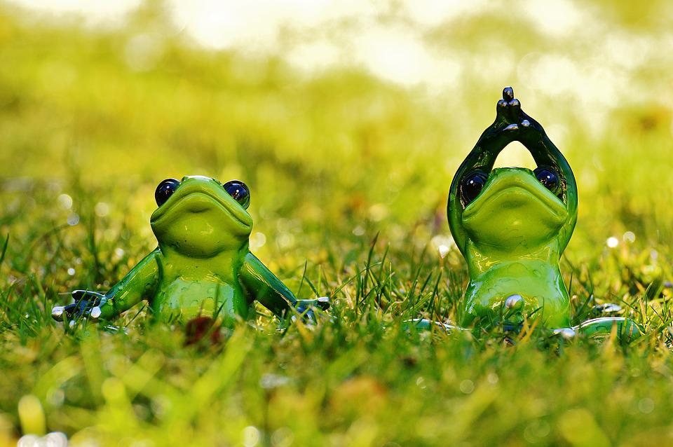 Sweet And Cute Wallpaper Frogs Yoga Meadow 183 Free Photo On Pixabay
