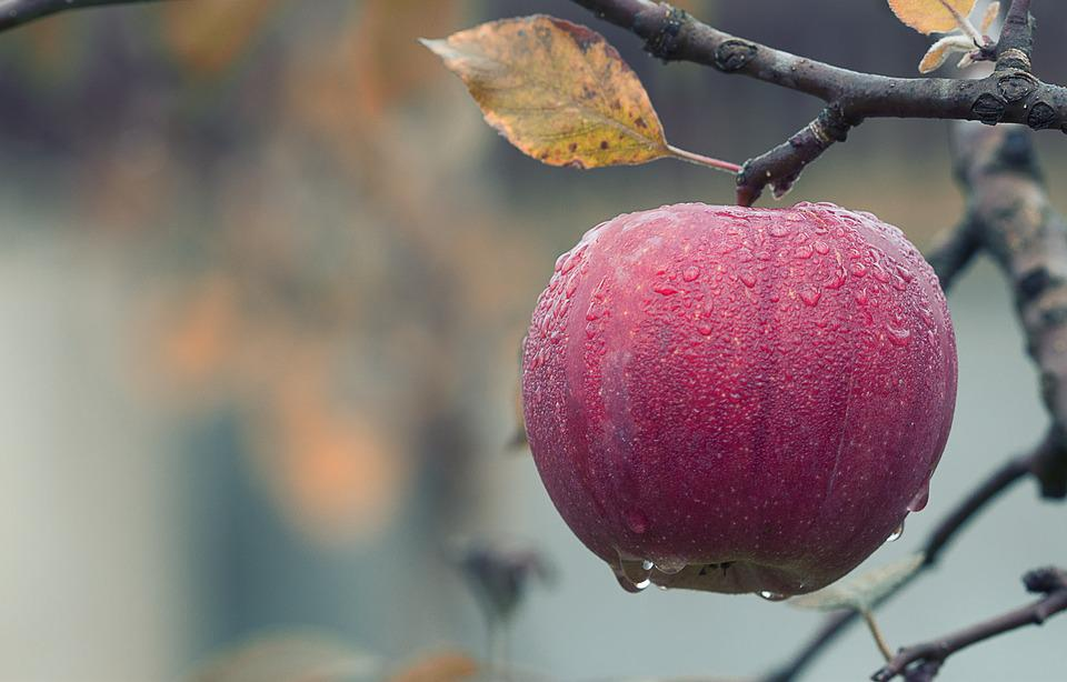 Wallpaper For Thanksgiving And Fall Apple Fall Juicy 183 Free Photo On Pixabay