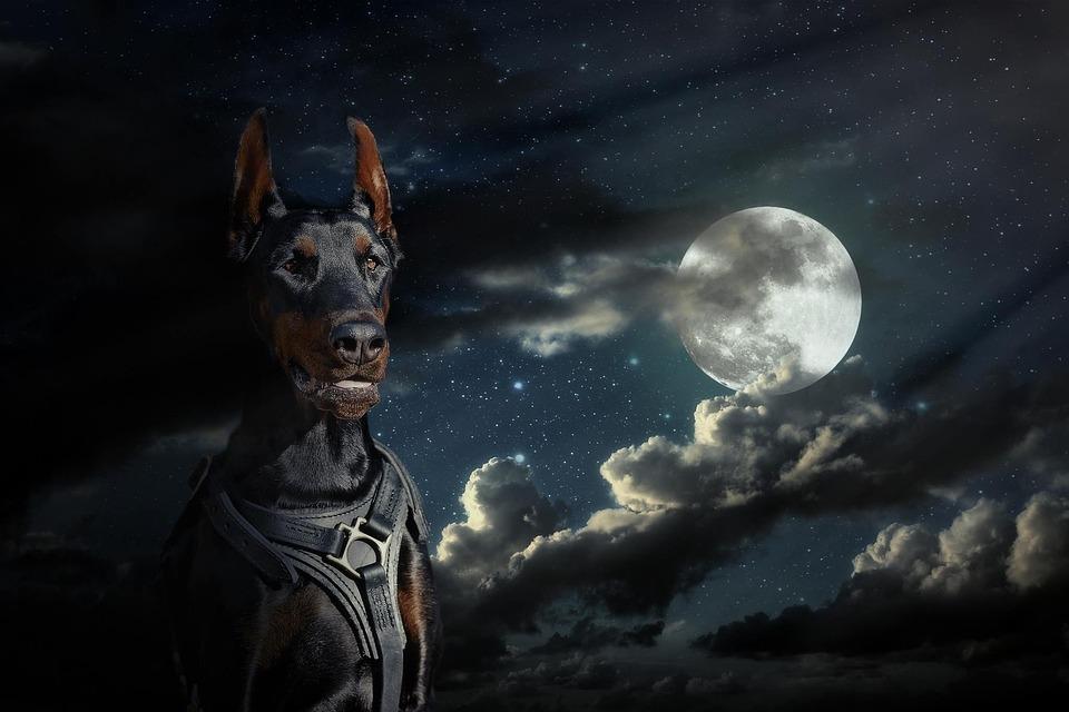 Cute Pet Animals Hd Wallpapers Free Photo Moon Doberman Dog Sky At Night Free