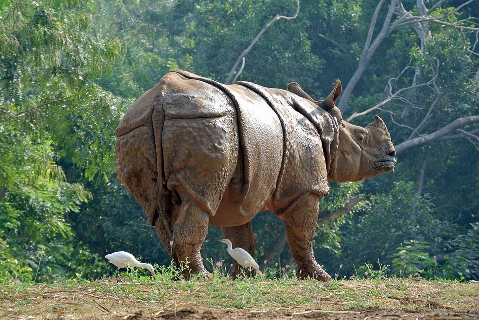 Hd Wallpaper Natur Nashorn R 252 Stung Indien 183 Kostenloses Foto Auf Pixabay