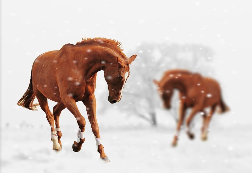 Animals In Snow Wallpaper Free Photo Winter Horses Play Snow Animal Free