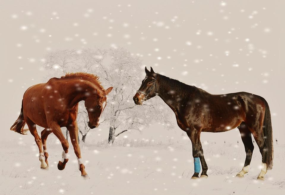 Nature Animal Wallpaper Hd Free Photo Winter Horses Play Snow Animal Free