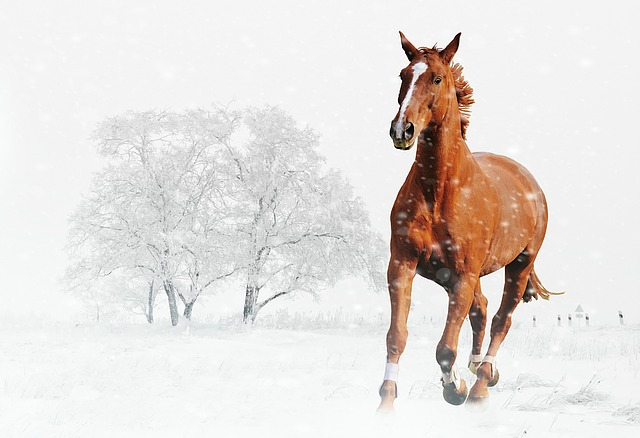 Cute Pony Wallpaper Winter Horse Play 183 Free Photo On Pixabay