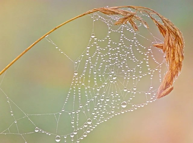 Drip Coffee Cobweb Dewdrop Network · Free Photo On Pixabay