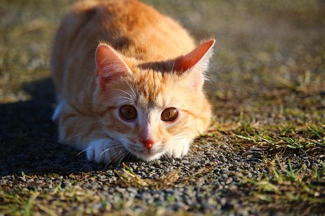 Baby Cute Animals Wallpaper Free Photo Cat Kitten Red Mackerel Tabby Free Image