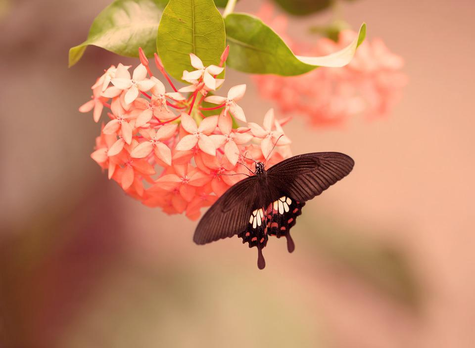 Animal Computer Wallpaper Free Photo Butterfly Flower Insect Summer Free Image