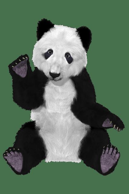 Hd Cute Panda Wallpaper Free Illustration Panda China Bear Furry Big Bear