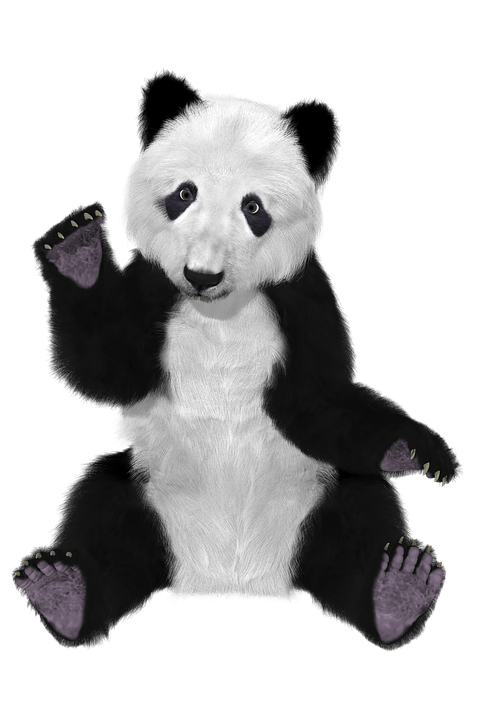 Cute Asian Wallpaper Free Illustration Panda China Bear Furry Big Bear