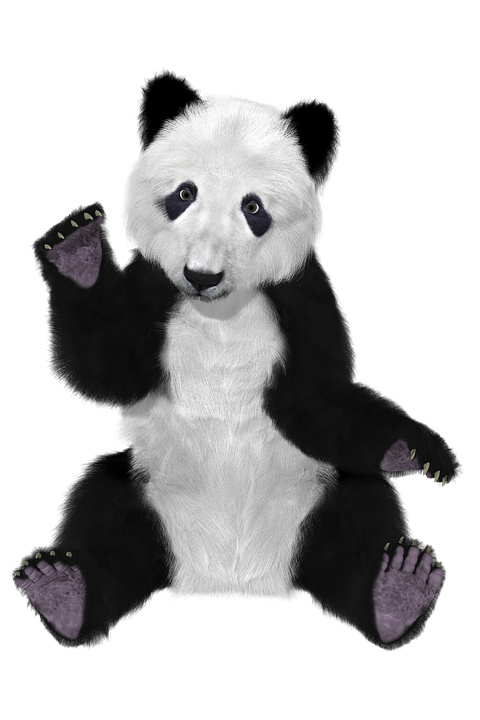 Medical Wallpaper Hd Free Illustration Panda China Bear Furry Big Bear