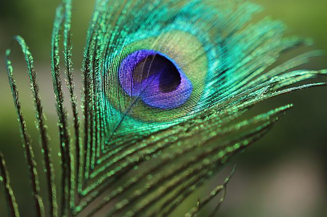 3d Glass Wallpapers For Desktop Hd Peacock Feather Birds 183 Free Photo On Pixabay