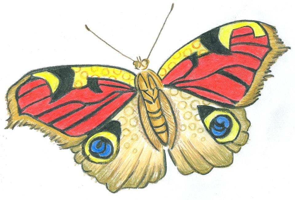 Wings Wallpaper Hd Butterfly Flight Wings 183 Free Image On Pixabay