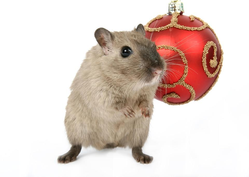 Cute Animal Wallpapers Free Free Photo Animal Celebration Christmas Free Image On