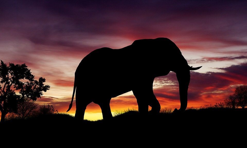 Business Inspirational Quotes Wallpaper Download Free Illustration Nature Sunset Elephant Africa Free