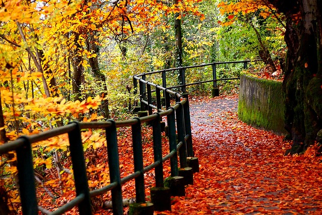 Fall Woodsy Pc Wallpaper Nature Fall Autumn 183 Free Photo On Pixabay