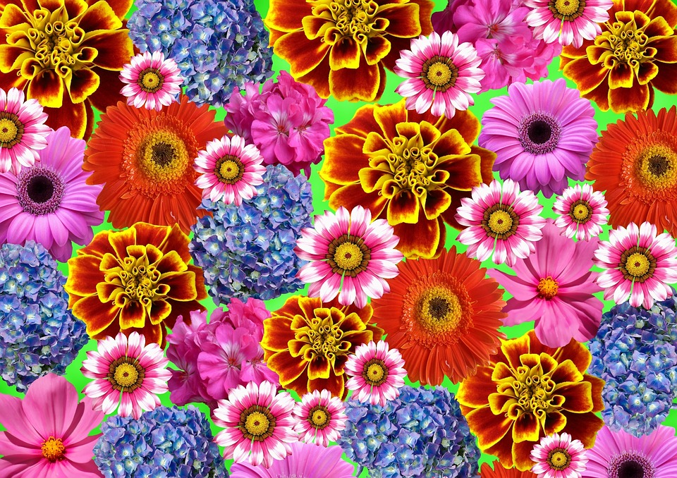 Flower Colorful Summer · Free image on Pixabay