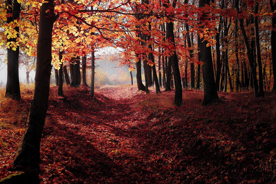 Hd Wallpaper Fall Leaf Change Free Photo Forest Autumn Fall Nature Free Image On
