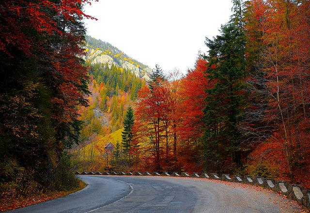 Fall Foliage Hd Wallpaper Free Photo Forest Road Autumn Trees Road Free Image