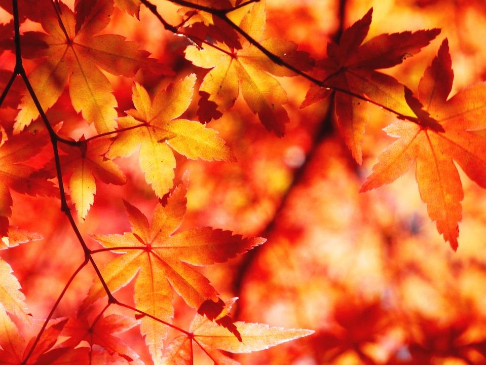 November Fall Wallpaper Herfst Bladeren Aomoriya 183 Gratis Foto Op Pixabay